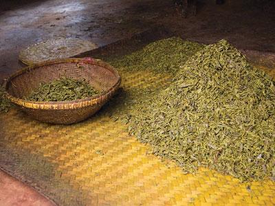 pickled tea leaves